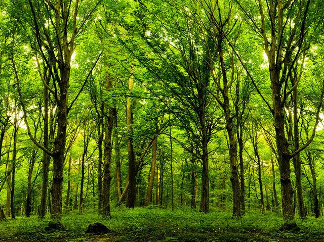 beautywoods