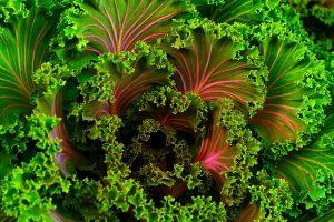 greenkale