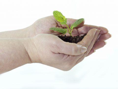 are plants sentient