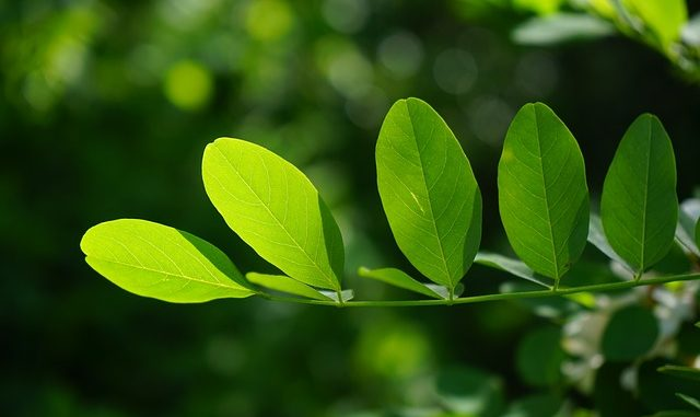 7 Outstanding Health Benefits of Chlorophyll