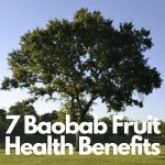 7 Baobab Fruit Health Benefits